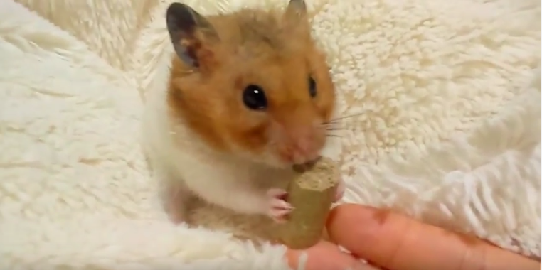食べ ハムスター ない ペレット